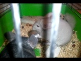 Мышка бегает с миской