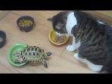 А вы думали кошки боятся собак ??? Нет, они боятся черепашек-нинзя))))